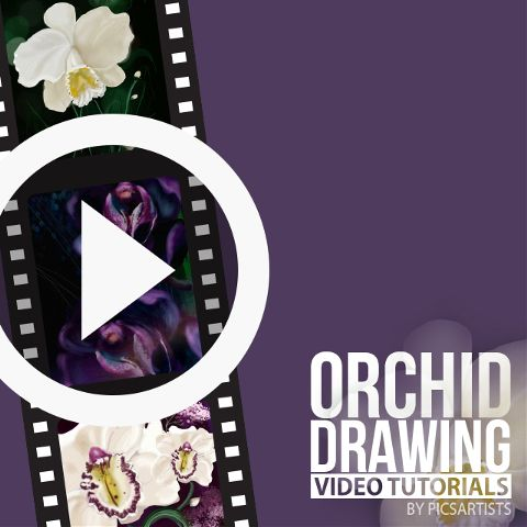 orchid drawing time lapse video