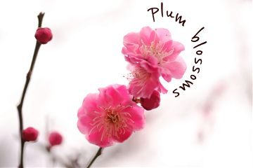 cute flower nature spring winter