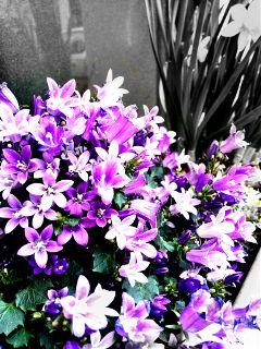 flower nature spring