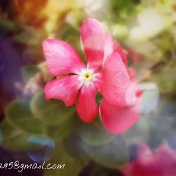 spring bokeh flower hellospring