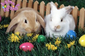 cute colorful pets & animals holiday
