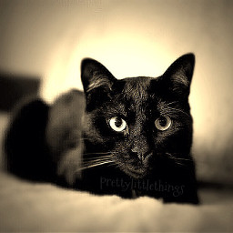 mypet photography hdr pets & animals sepia