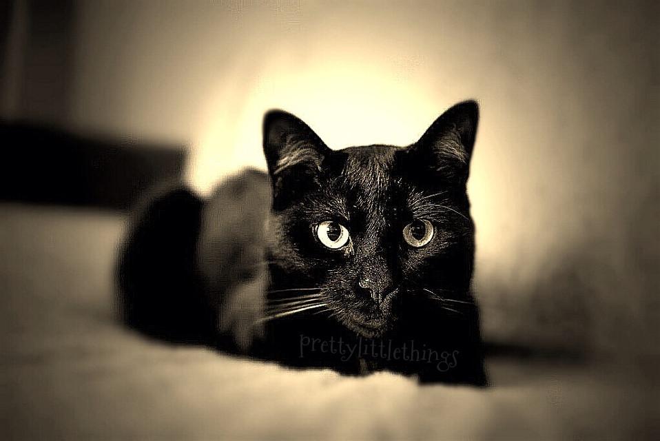 my lil cat Sam   #love #cute  #hdr  #cat #emotions  #blackcats