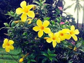 yellow flower nature photography spring