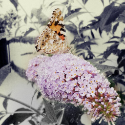 petsandanimals butterfly wappurplehue