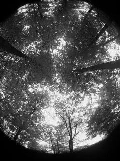 forest wood black & white fisheye galaxys3