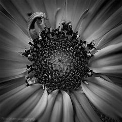 black & white flower photography macro