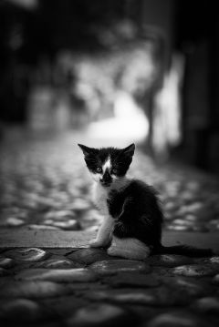 kitten cute cat blackandwhite street