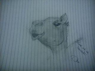 cute petsandanimals draw camel creative
