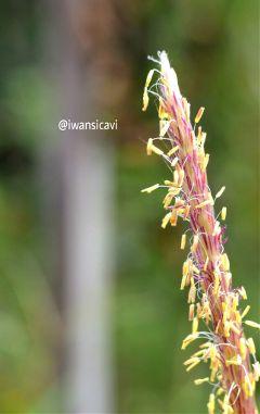 flower nature macro photography
