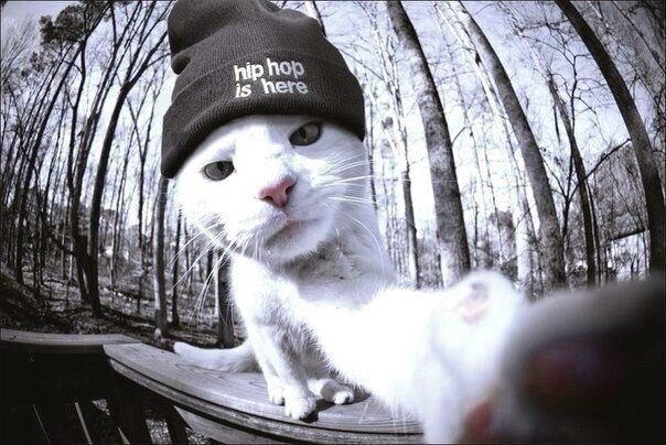 Hiphopcatishereselfie Image By Foreveralone