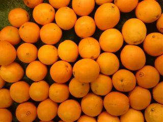oranges colorful noeditnofun