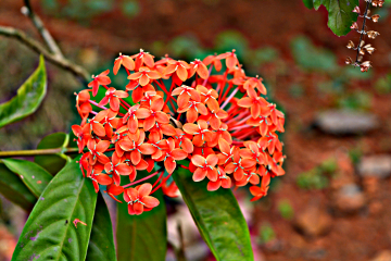 colorful flower nature summer hdr