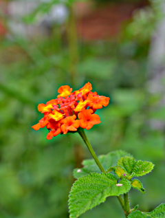 colorful cute flower hdr summer