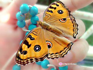 butterfly myhand love myday beautiful
